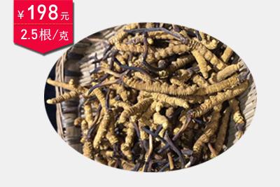 冬虫夏草2.5条1克图片