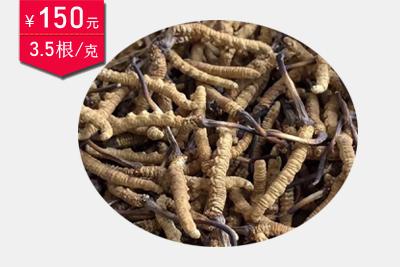 冬虫夏草3.5条1克图片