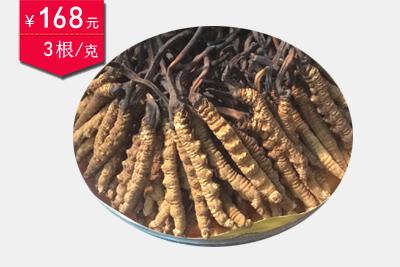冬虫夏草3条1克图片
