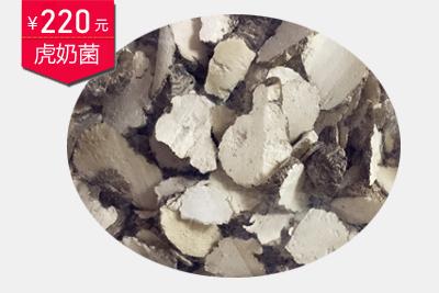 野生虎奶菌图片