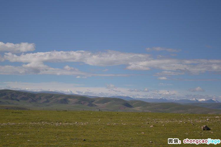 那曲县的草原和雪山图片