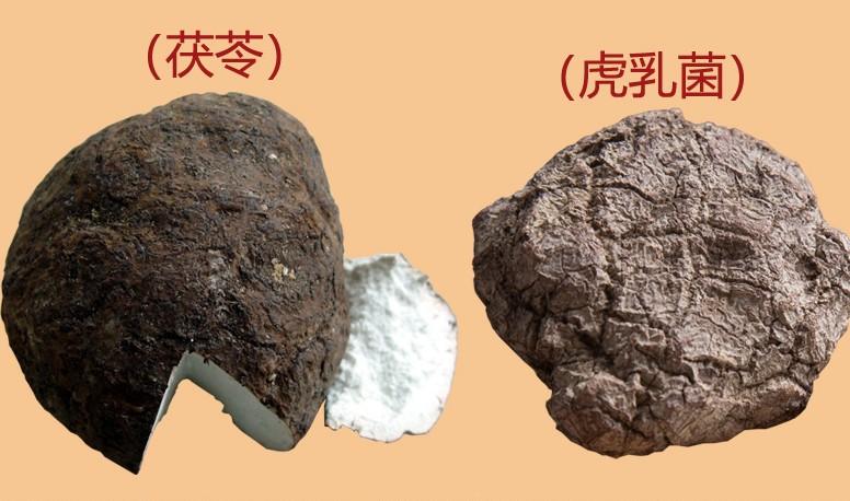 虎奶菌和茯苓的区别图片