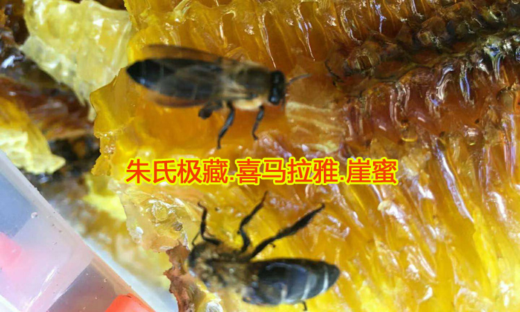 岩蜜黑大蜜蜂图片