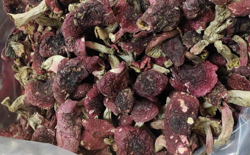 野生红菇中菇图片