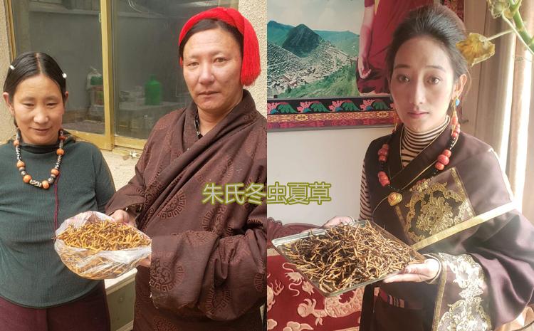 西藏那区比如县虫草收购