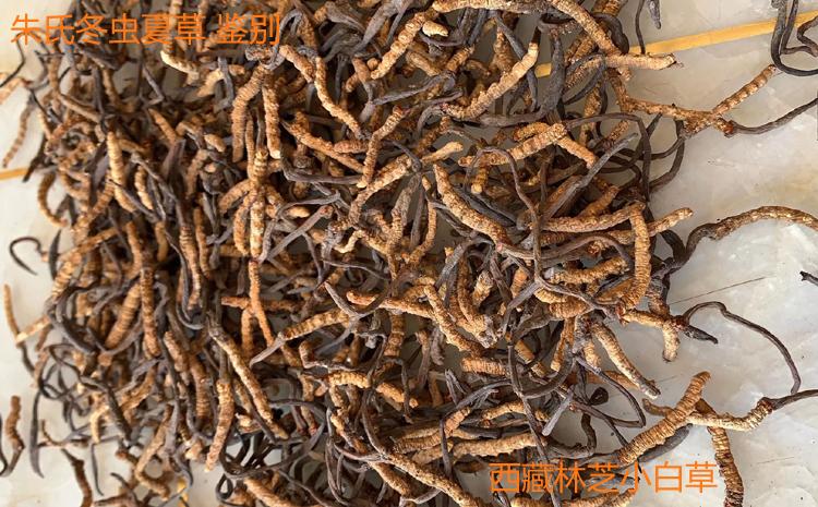 西藏小白草图片