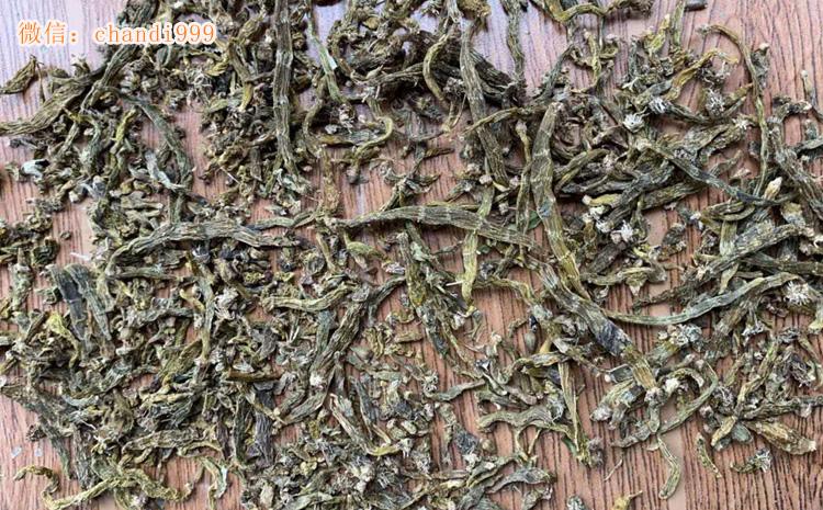 红珠虫石斛图片
