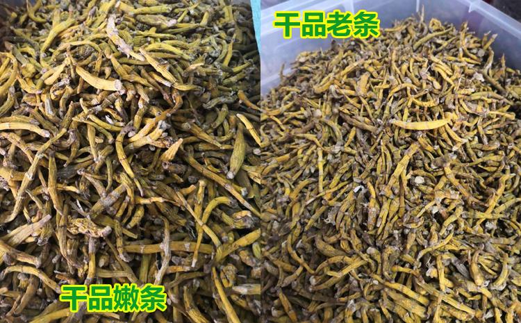 虎牙石斛鲜品和干品图片